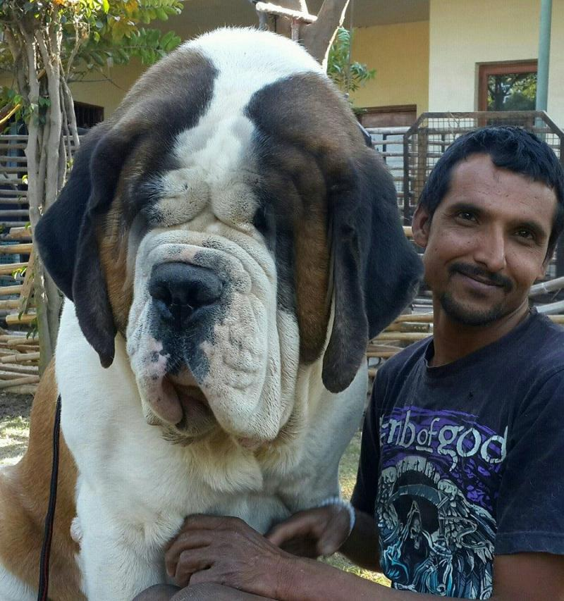 Good Dog Breeders In Delhi